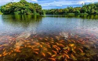 Какая рыба водится в озере