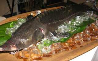 Кострюк рыба википедия