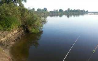 Ловля рыбы на яйца летом с лодки