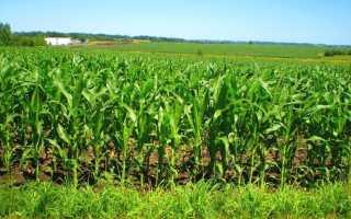 Для кукурузы