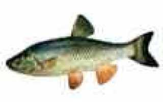 Календарь ловли рыбы