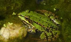 Как поймать лягушку