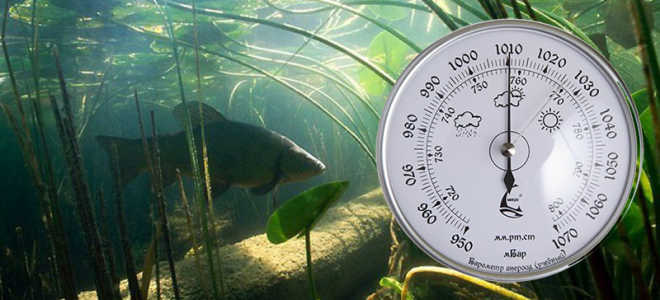 Какое давление считается нормальным для рыбалки