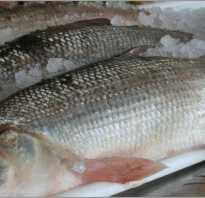 Белорыбица что за рыба как готовить