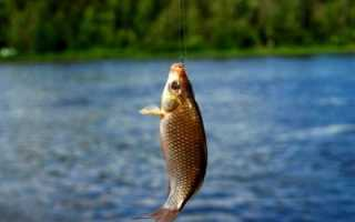 Как правильно ловить карася на поплавочную удочку