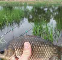 Как рыбачить на карася