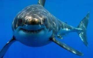 Акулы черного моря фото