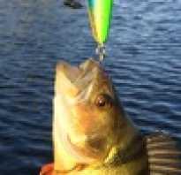 Блог рыбака