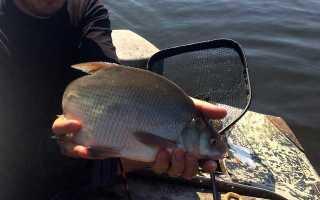 Ловля рыбы на кольцо с лодки