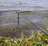 Влияние ветра на клев рыбы