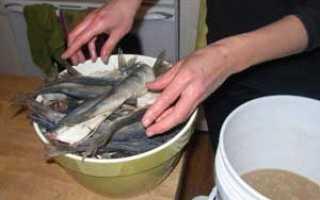 Как правильно солить рыбу для сушки