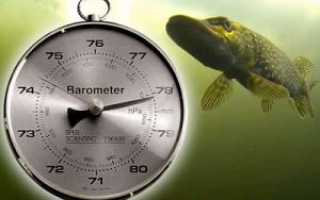 Влияние давления на клев рыбы