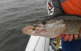 Вольфрамовые поводки для рыбалки
